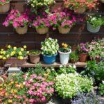 ガーデニングしたい夏に強い花とは?プランターでも育つ?