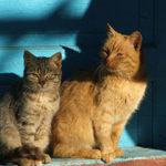 猫のオスとメスの性格の違いは?あなたが飼いやすいのはどっち?