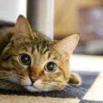 猫の寒さ対策!留守時の寒さ対策やグッズにトイレにも注意が必要!
