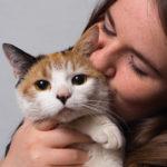 猫ちゃんのしこり!良性? 悪性?