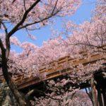 長野県の桜の名所!ココならインスタ映えする!